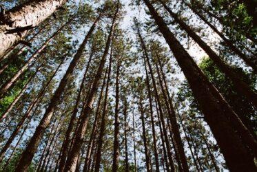Vue en contre plongée d'arbres dans une forêt