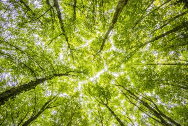 Vue en contre-plongée des arbres feuillus dans une forêt