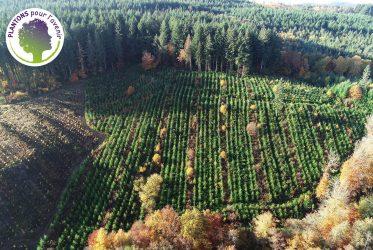 Photo aérienne de la forêt avec logo
